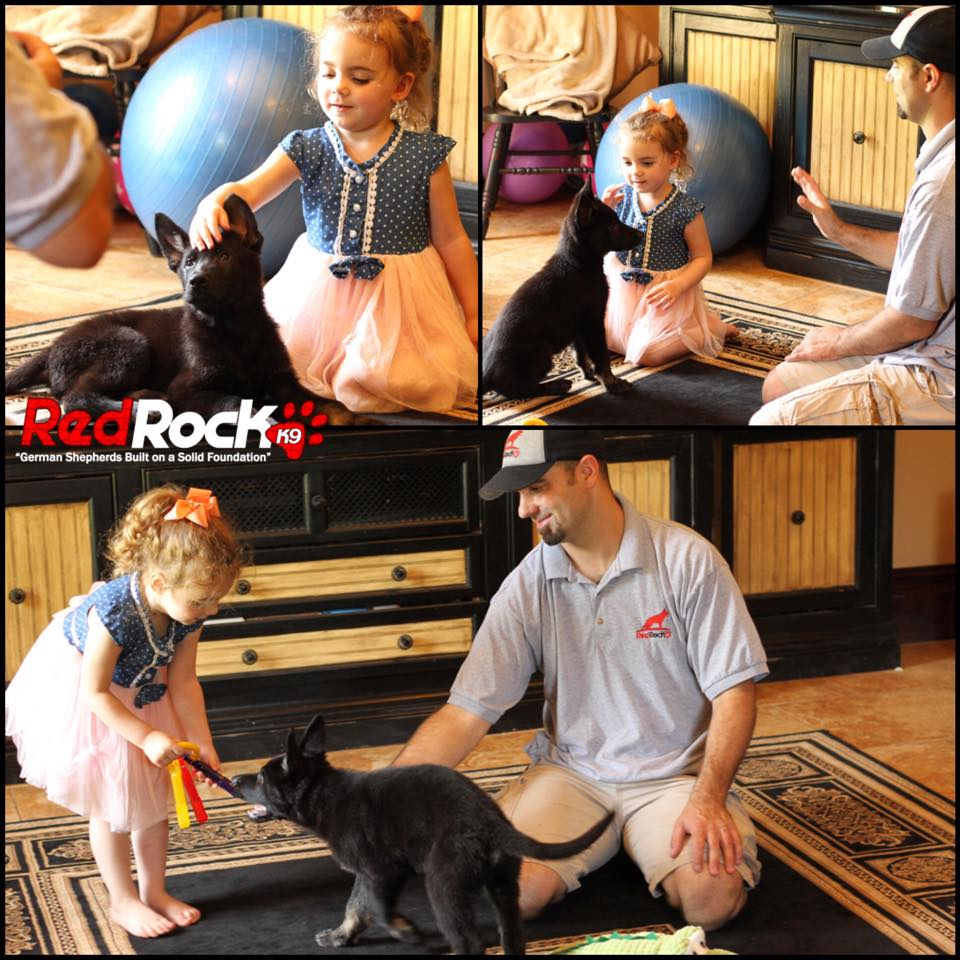 Red Rock K9 Puppy interacts with child