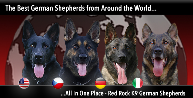 The Best German Shepherds from all over the world all in one place at Red Rock K9 German Shepherds Home Page